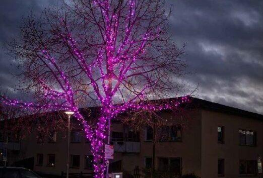 Rosa träd i mörker