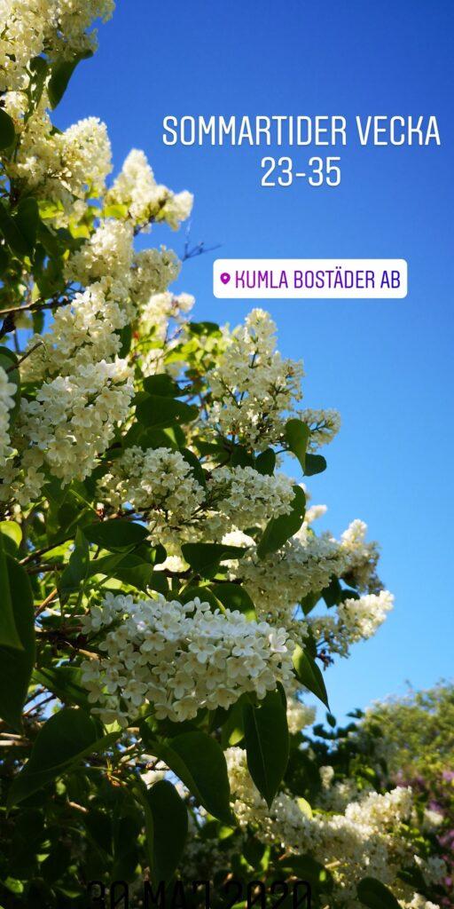 Syrenbuske